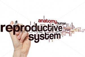 stock-photo-reproductive-system-word-cloud-concept-291671999